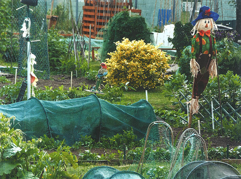 -allotment_with_scarecrow