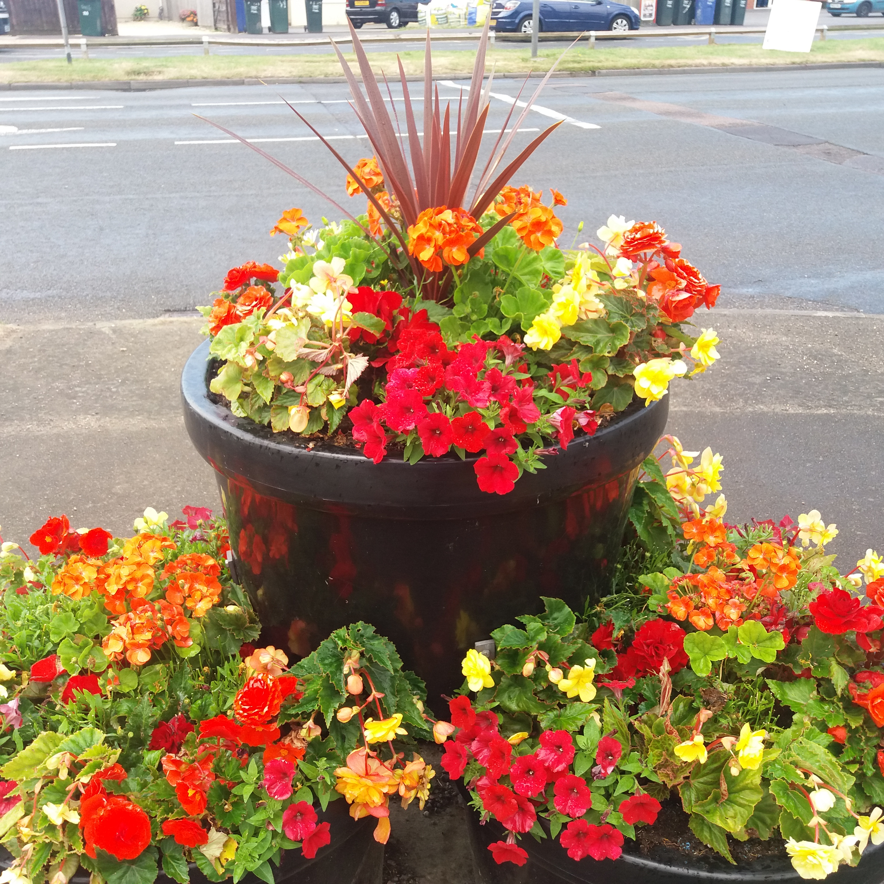 3 baskets of red and yellow flowers