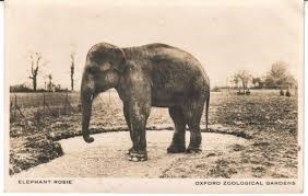 Old photo of an elephant
